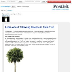 Learn About Yellowing Disease in Palm Tree