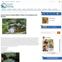 Learn How to Keep Water Clear in Fountains and Ponds