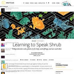 Learning to Speak Shrub - Issue 59: Connections