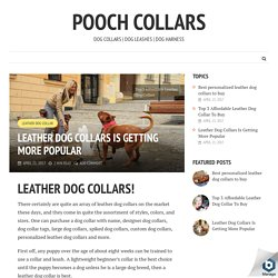 Leather Dog Collars Is Getting More Popular - Pooch Collars