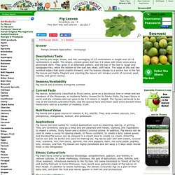 Fig Leaves Information, Recipes and Facts