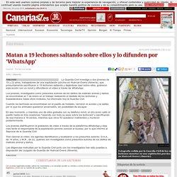 Sucesos. Matan a 19 lechones saltando sobre ellos y lo difunden por 'WhatsApp'