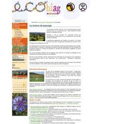 La lecture de paysage, une démarche de l'étude de milieu au sein d'Ecobiag