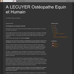 A LECUYER Ostéopathe Equin et Humain: Croissance du jeune cheval