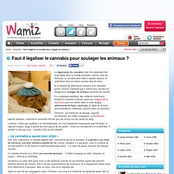 Faut-il légaliser le cannabis pour soulager les animaux ? - Société