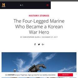 The Four-Legged Marine Who Became a Korean War Hero - History in the Headlines