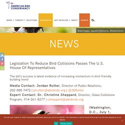 Legislation to Reduce Bird Collisions Passes the U.S. House of Representatives