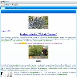 """Légume oublié : le CHOU PALMIER """"NOIR DE TOSCANE"""""""