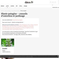 Liste de légumes, conseils de plantation, semis et récolte