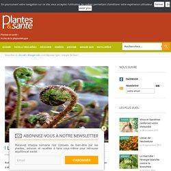 Les légumes tiges : mangez de l'eau! - Manger sain - Plantes & santé