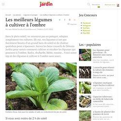 20 légumes qui poussent à l'ombre