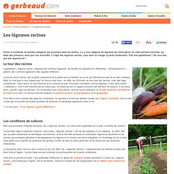 Légumes racines : introduction