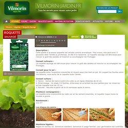Légumes - Roquette Sauvage