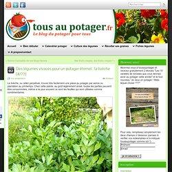 Des légumes vivaces pour un potager éternel : la livèche (4/??)