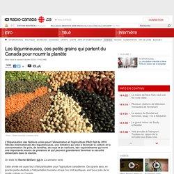 Les légumineuses, ces petits grains qui partent du Canada pour nourrir la planète