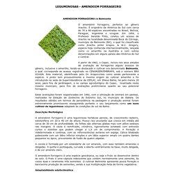 LEGUMINOSAS - AMENDOIM FORRAGEIRO
