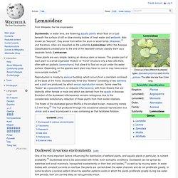 Lemnoideae