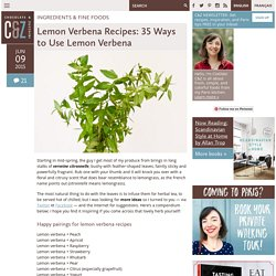 Lemon Verbena Recipes: 35 Ways to Use Lemon Verbena
