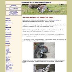 Le lémurien est un animal de Madagascar