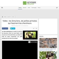 Vidéo : les lémuriens, de petites primates qui fascinent les chercheurs