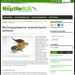 What Do Leopard Geckos Eat? - Zoo Researched Diet