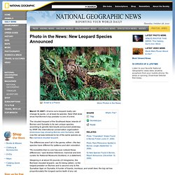 New Leopard Species Announced