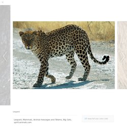 Leopard - Spirit Animal Totems