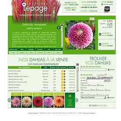 Lepage - vente de bulbes - detail - DAHLIA 'Acrobate'