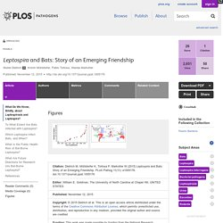 PLOS 12/11/15 Leptospira and Bats: Story of an Emerging Friendship