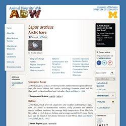 Animal Diversity: Arctic hare - Lepus arcticus