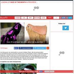 Les 25 animaux les plus rares de la planète