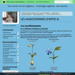 Inflorescences, fruits & graines – J.-M. Gil