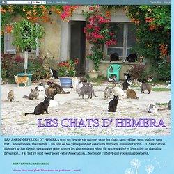 LES CHATS D' HEMERA