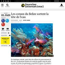 Les coraux du Belize sortent la tête de l'eau