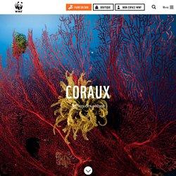 Les coraux, espèces en danger