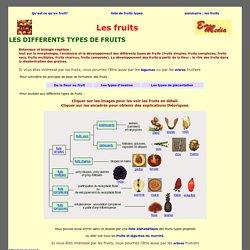 Les différents types de fruits