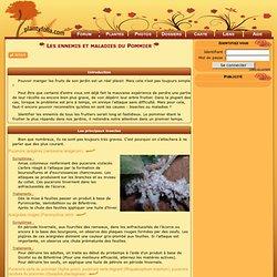 Les ennemis et maladies du Pommier
