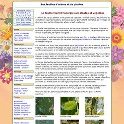 Les feuilles d'arbres et de plantes