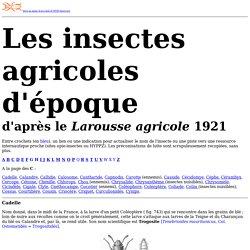 Les insectes agricoles 1921 : les C