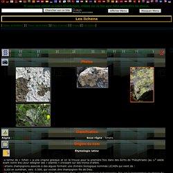 Les lichens