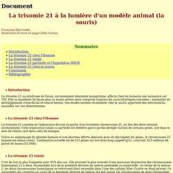 Les modèles animaux de trisomie 21
