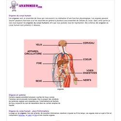 Les organes du corps humain