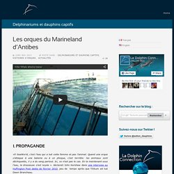 Les orques du Marineland d'Antibes