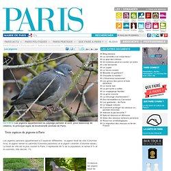 Les pigeons - Paris.fr-Mozilla Firefox