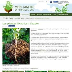 Les plantes fixatrices d'azote - monjardinenpermaculture.fr