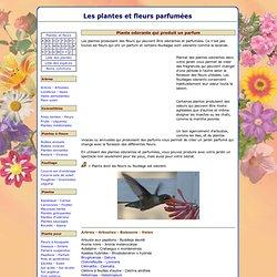 Les plantes et fleurs parfumées