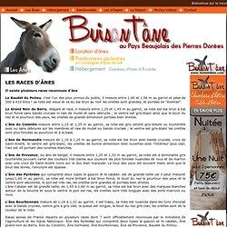 Les races d'ânes . Les ânes communs