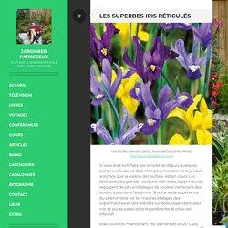 Les superbes iris réticulés