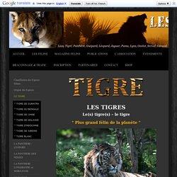 les Tigres, Tigre, Tiger