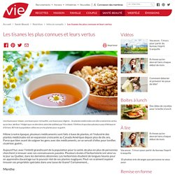 Les tisanes les plus connues et leurs vertus - Infos et conseils nutrition